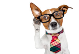 Dog dressed up in tie and glasses holding paw to his ear